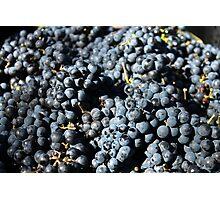 Potential Wine Photographic Print