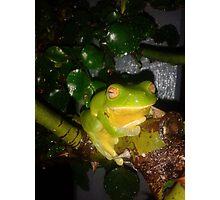 """"""" Kermit """" Photographic Print"""