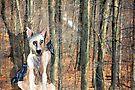 Forest Friends by Diane  Kramer