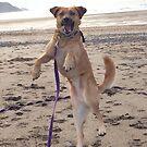 Happy dog by Peter Barrett