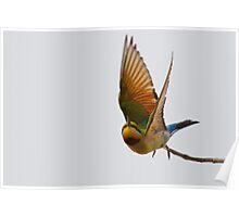 Rainbow Bee-eater Flight Poster