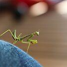Little green man by Tracey McKenzie