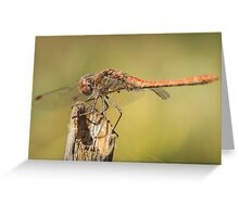 Dragonfly 3 Greeting Card