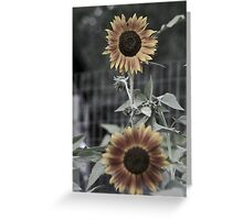 Muted Sunflowers Greeting Card