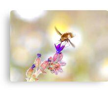 Bee close-up 2 Canvas Print