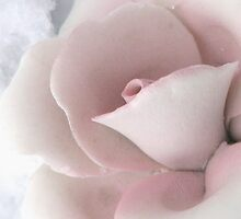 Wistful In Pink by AngieDavies
