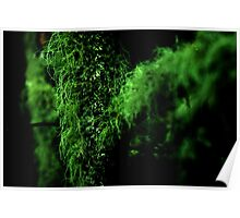 Mosses Poster
