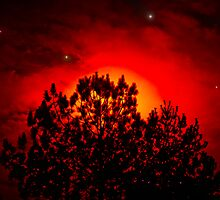 Red Stars Pine Sun by Roses1973