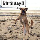 Happy Dog - Happy Birthday by Peter Barrett