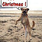 Happy Dog - Happy Christmas by Peter Barrett