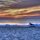 The First Bird on the Beach by Michele Ford