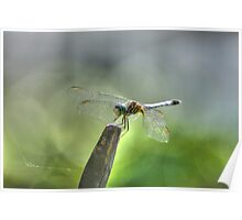 The Wonderful Dragonfly, Macro Nature Photograph Poster