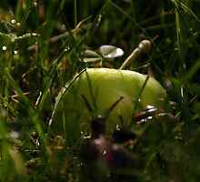 found an apple by shottop