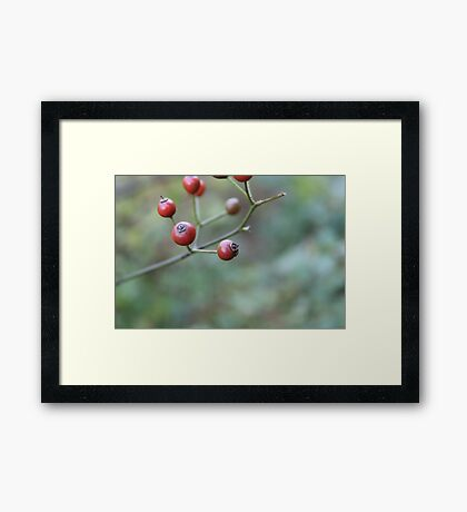 web berries Framed Print
