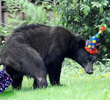 Birthday Bear by Darren Quarin