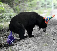 Happy Birthday Bear by Darren Quarin