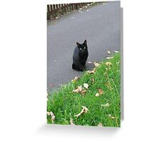 Piercing Eyes - October Kitty Greeting Card