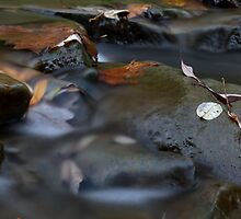 Brandywine Gorge No. 1 by ABreedon