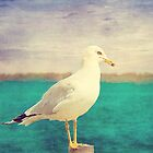 Seagull by afeimages