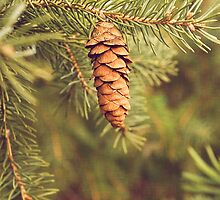 Pine Cone by afeimages