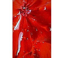 Swiftly Red Photographic Print
