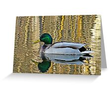 Duck swimming in golden water Greeting Card