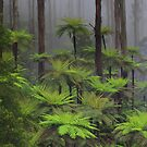 The tallest flowering trees in the world. Mountain ash    by Donovan Wilson
