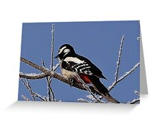 Black and white spotted woodpecker Greeting Card
