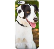 Spotty Rescue Dog *PROCEEDS TO CHARITY* iPhone Case/Skin
