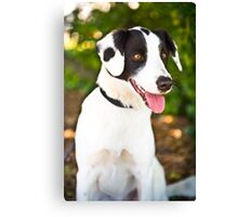 Spotty Rescue Dog *PROCEEDS TO CHARITY* Canvas Print