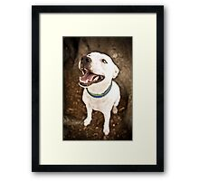 Staffy Under Tree *PROCEEDS TO CHARITY* Framed Print