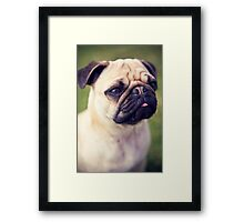 Cute Pug *PROCEEDS TO CHARITY* Framed Print