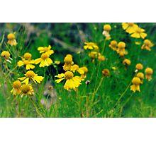 Yellow Wildflowers Photographic Print