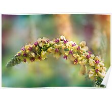 gently curved Poster