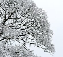 Snow Veins by pic-n-mix