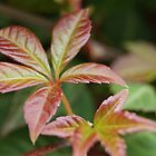 Rusty Leaf  by KirstyJSwinger