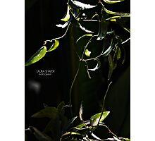 PANTONE - VINE  Photographic Print