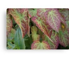 Leafy Green and Red  Canvas Print