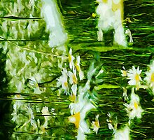 Oxeye Daisy Abstract Impressionism by pjwuebker