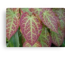 Green Veined Red Leaf  Canvas Print