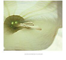 PANTONE #5875 Photographic Print