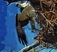 Osprey St George Island Florida Abstract Impressionism by pjwuebker