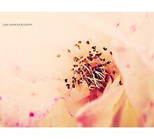 PANTONE - FLOWER #486 Photographic Print