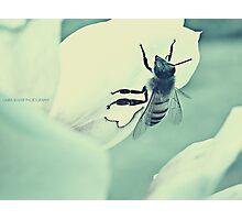 PANTONE - BEE #443 Photographic Print