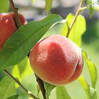 Peaches  by Rich Fletcher