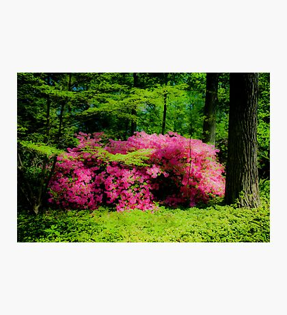 Botanical Garden Photographic Print