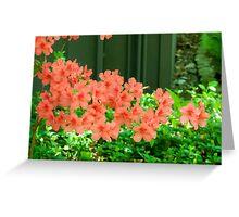 Salmon Pink Azalea Flowers Greeting Card