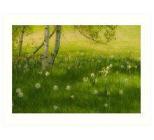 Birch Tree and Daffodils Art Print