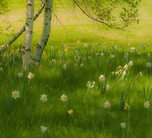 Birch Tree and Daffodils by Michael Shake