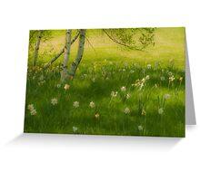 Birch Tree and Daffodils Greeting Card